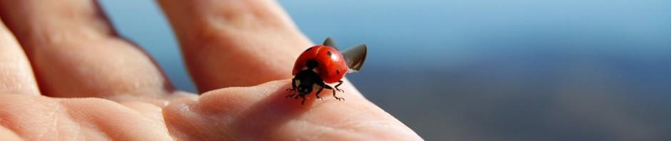 ladybug-455494